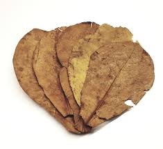 Seemandelbaumblätter