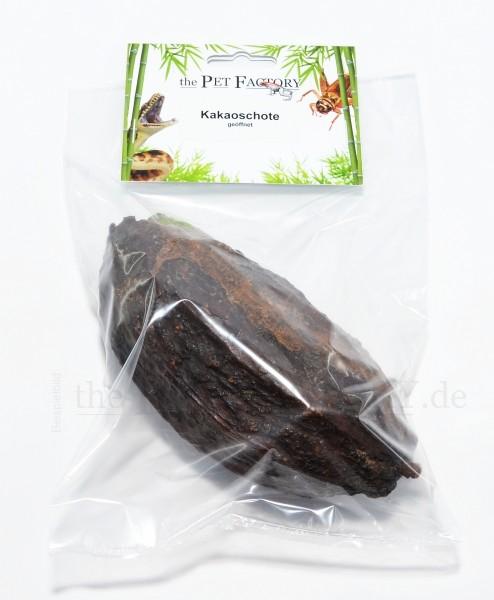 Kakaoschote geöffnet