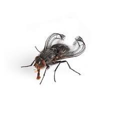 Terflies