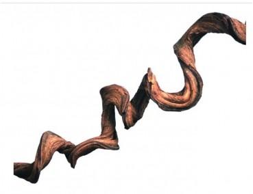Natürliche Liane ca. 2-3cm / Länge: ca. 65-70cm